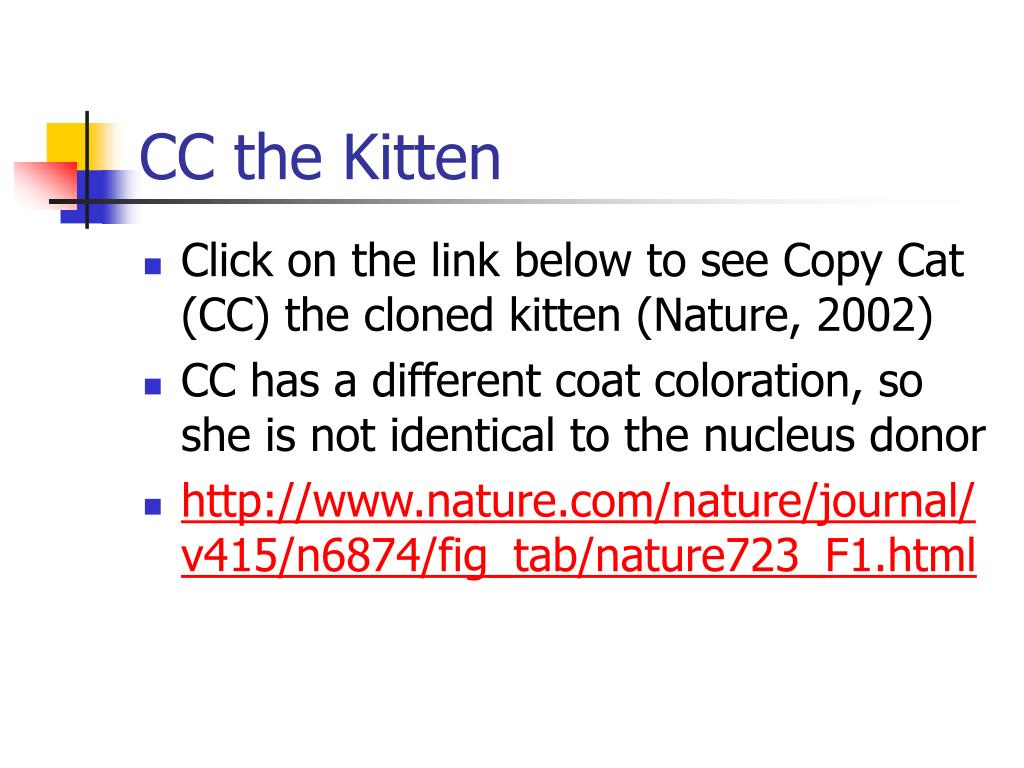 CC the Kitten