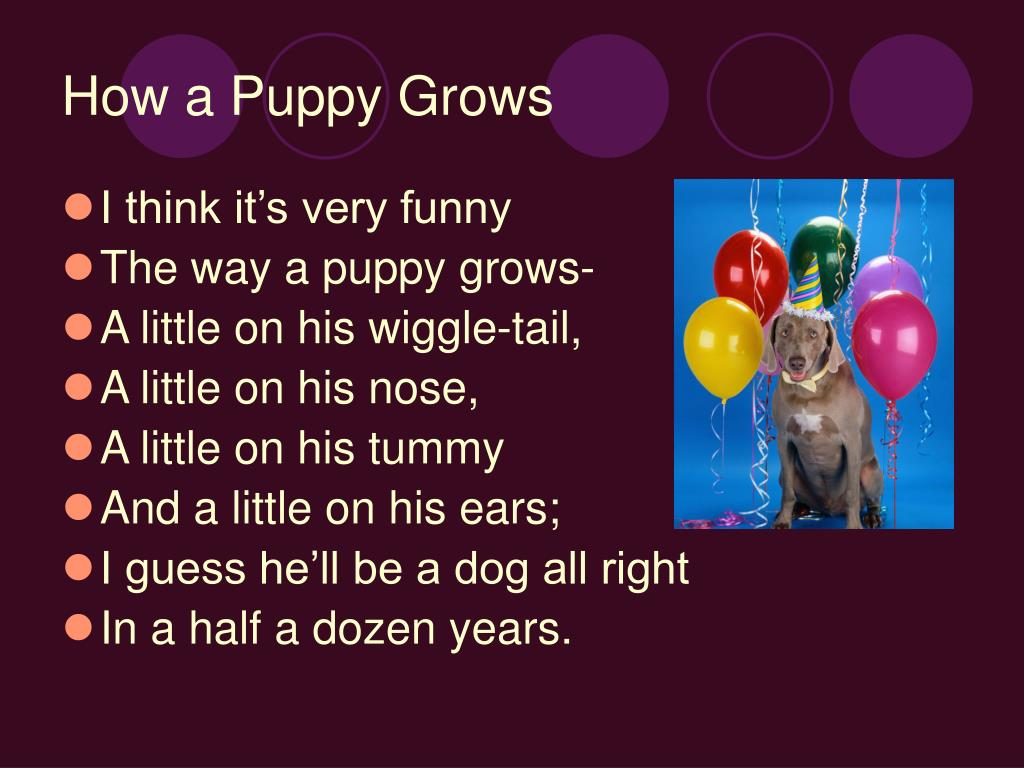 How a Puppy Grows