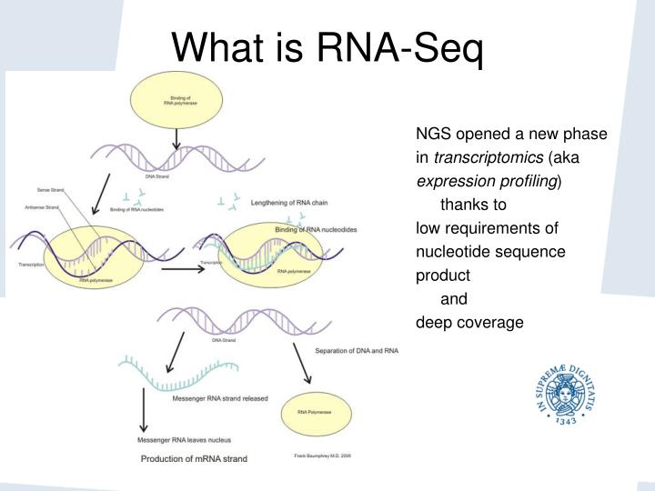 What is RNA-Seq