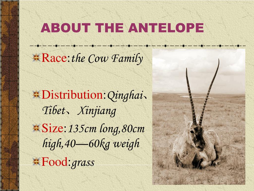 ABOUT THE ANTELOPE