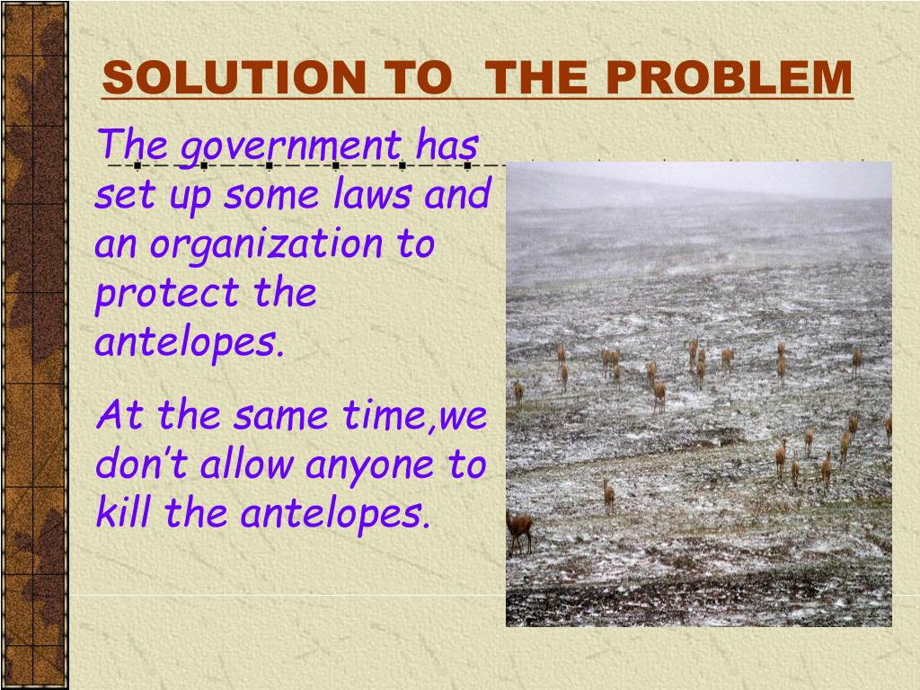 SOLUTION TO  THE PROBLEM