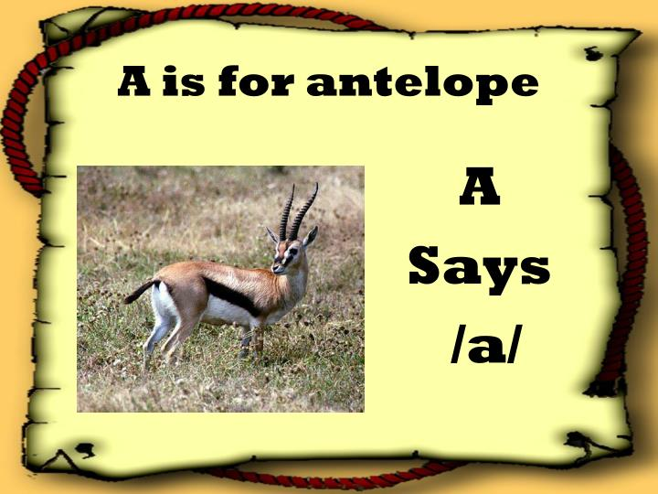 A is for antelope l.jpg