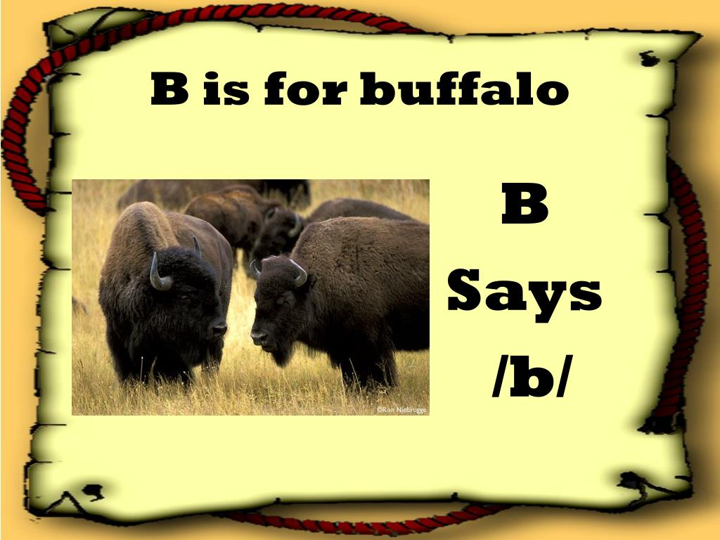 B is for buffalo
