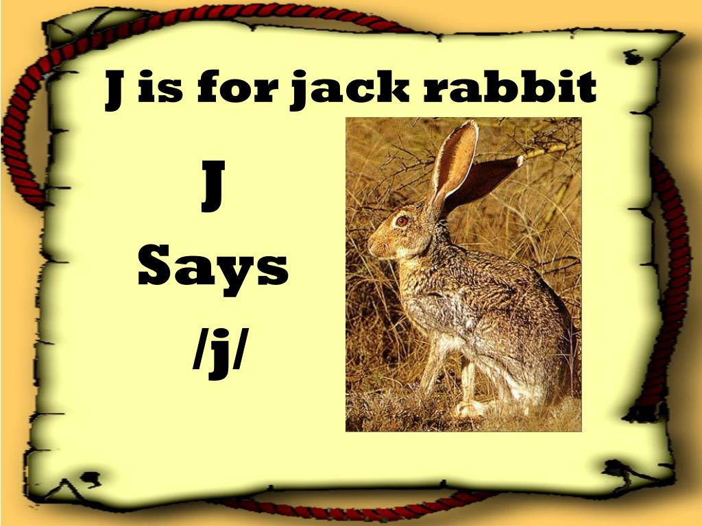 J is for jack rabbit