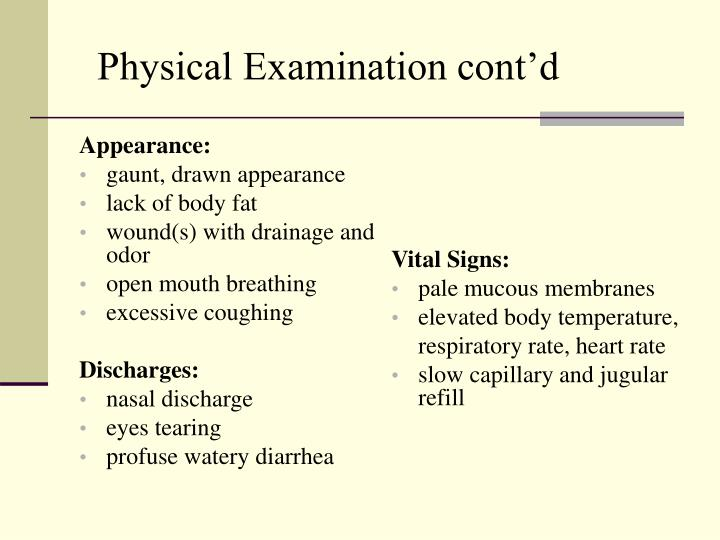 Physical Examination cont'd