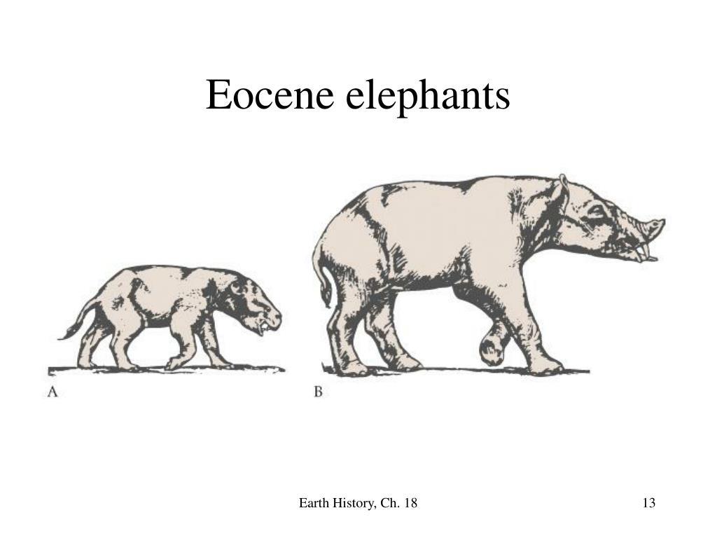 Eocene elephants