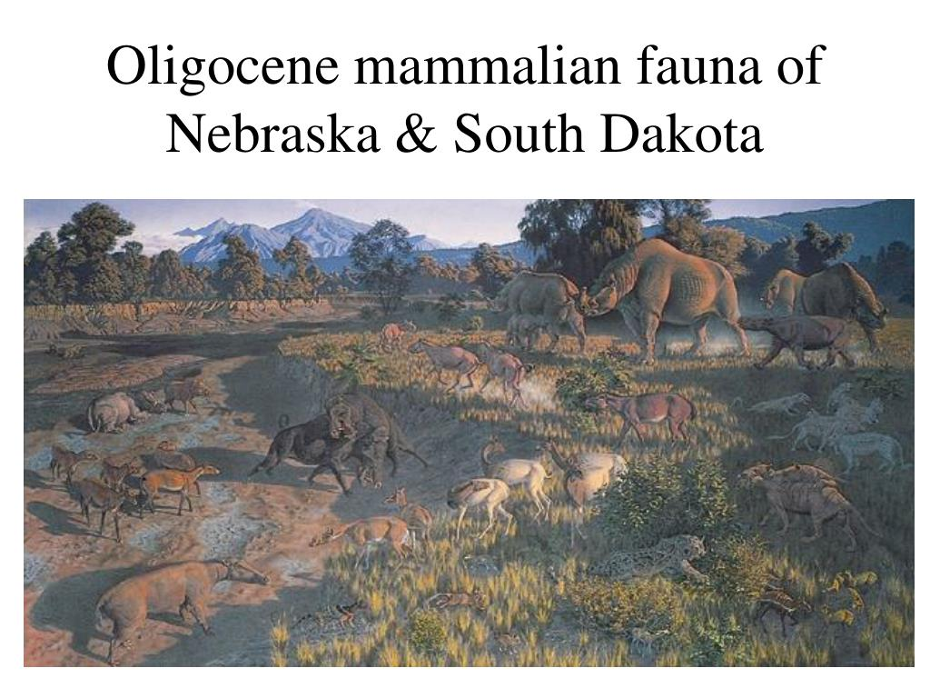 Oligocene mammalian fauna of Nebraska & South Dakota