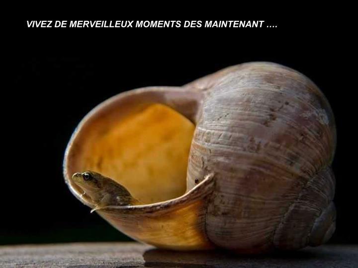 VIVEZ DE MERVEILLEUX MOMENTS DES MAINTENANT ….