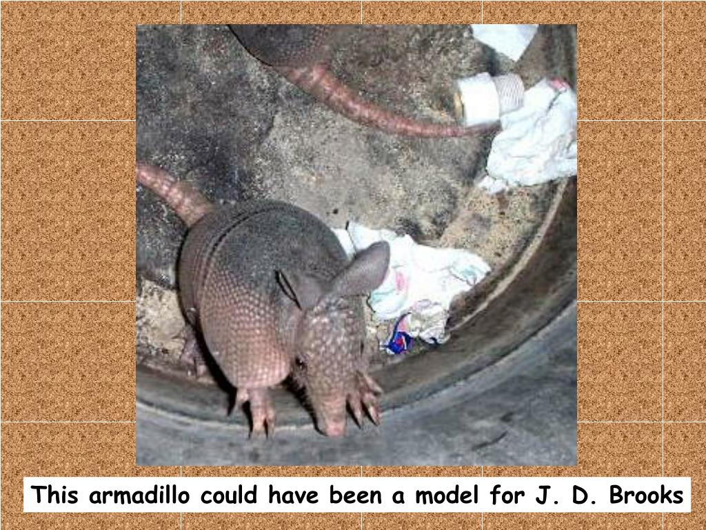 This armadillo could have been a model for J. D. Brooks