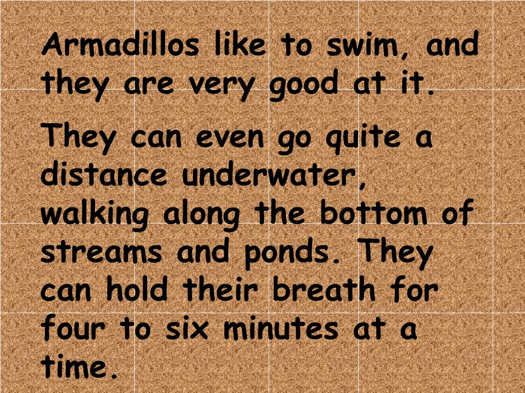 Armadillos like to swim, and they are very good at it.