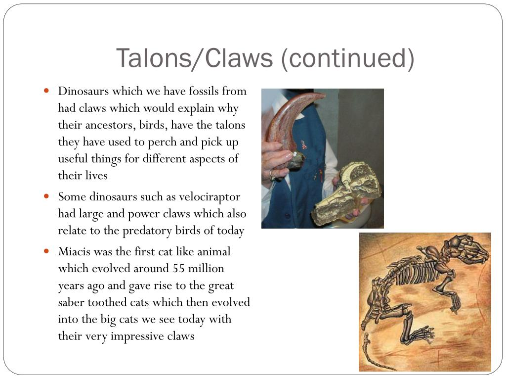 Talons/Claws (continued)