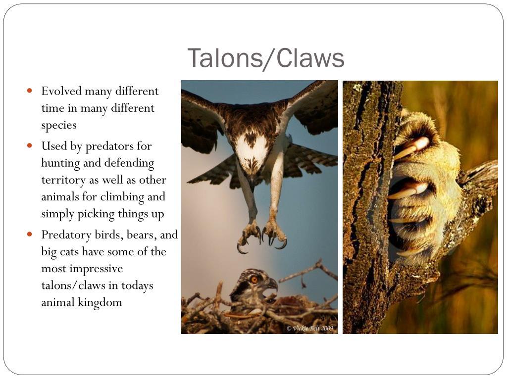 Talons/Claws