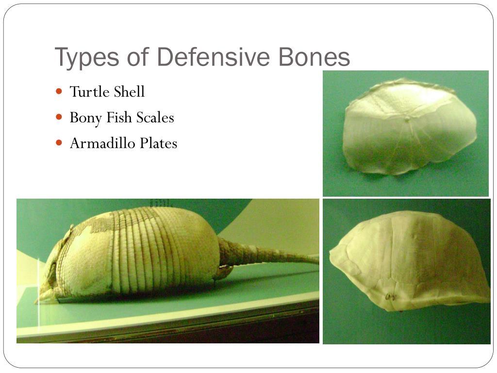 Types of Defensive Bones