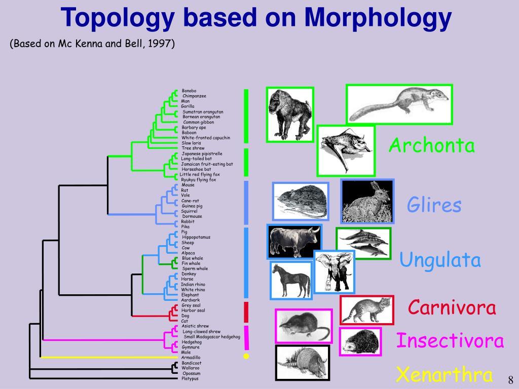Topology based on Morphology