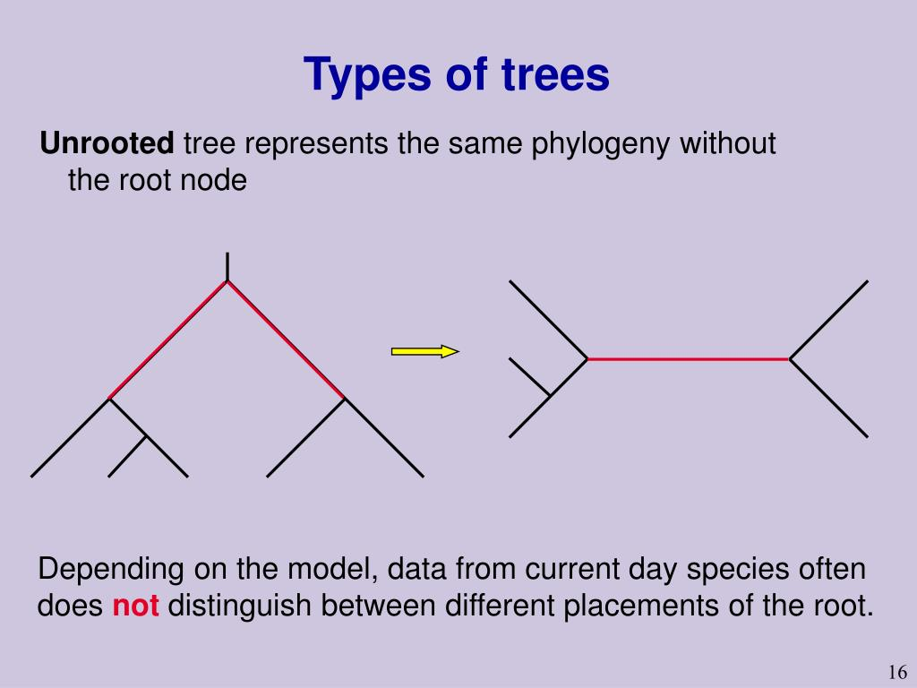 Types of trees