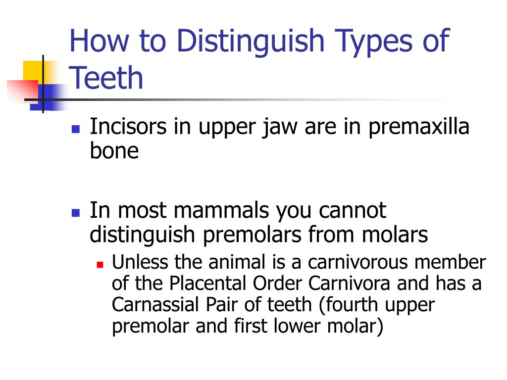 How to Distinguish Types of Teeth