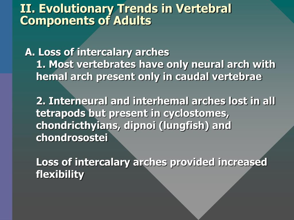 II. Evolutionary Trends in Vertebral Components of Adults
