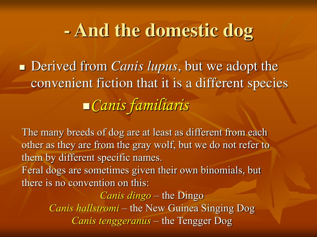- And the domestic dog