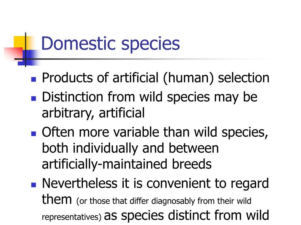 Domestic species