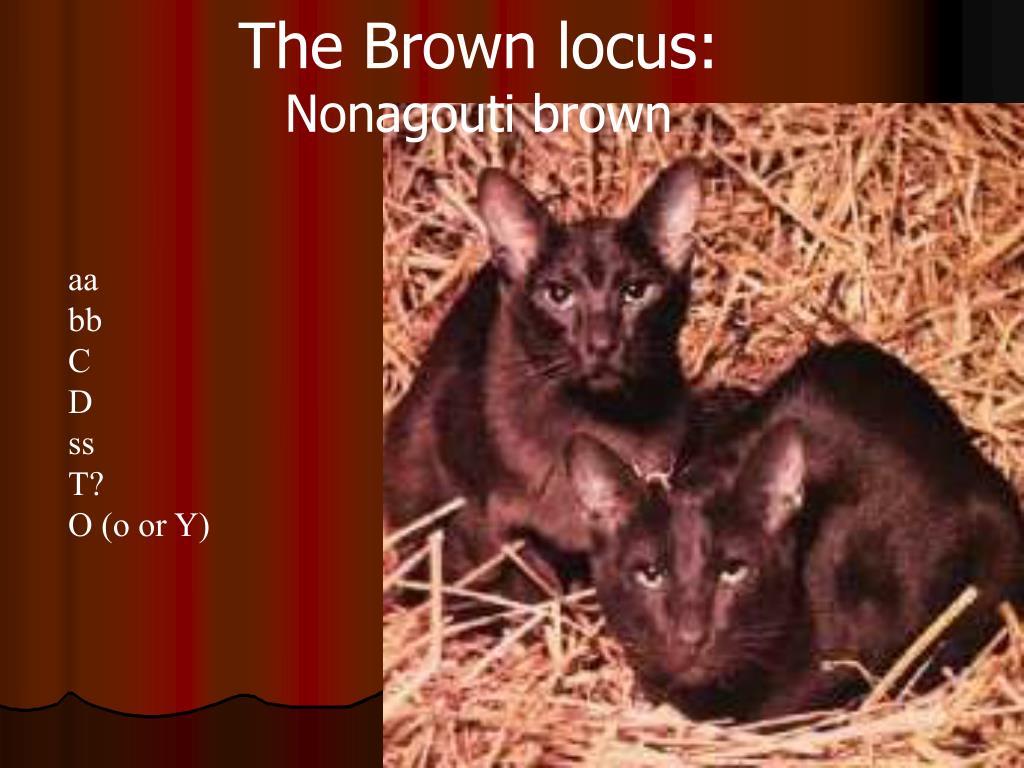 The Brown locus: