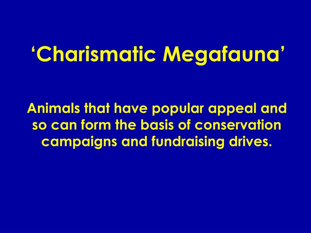 'Charismatic Megafauna'