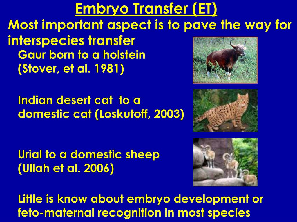 Embryo Transfer (ET)