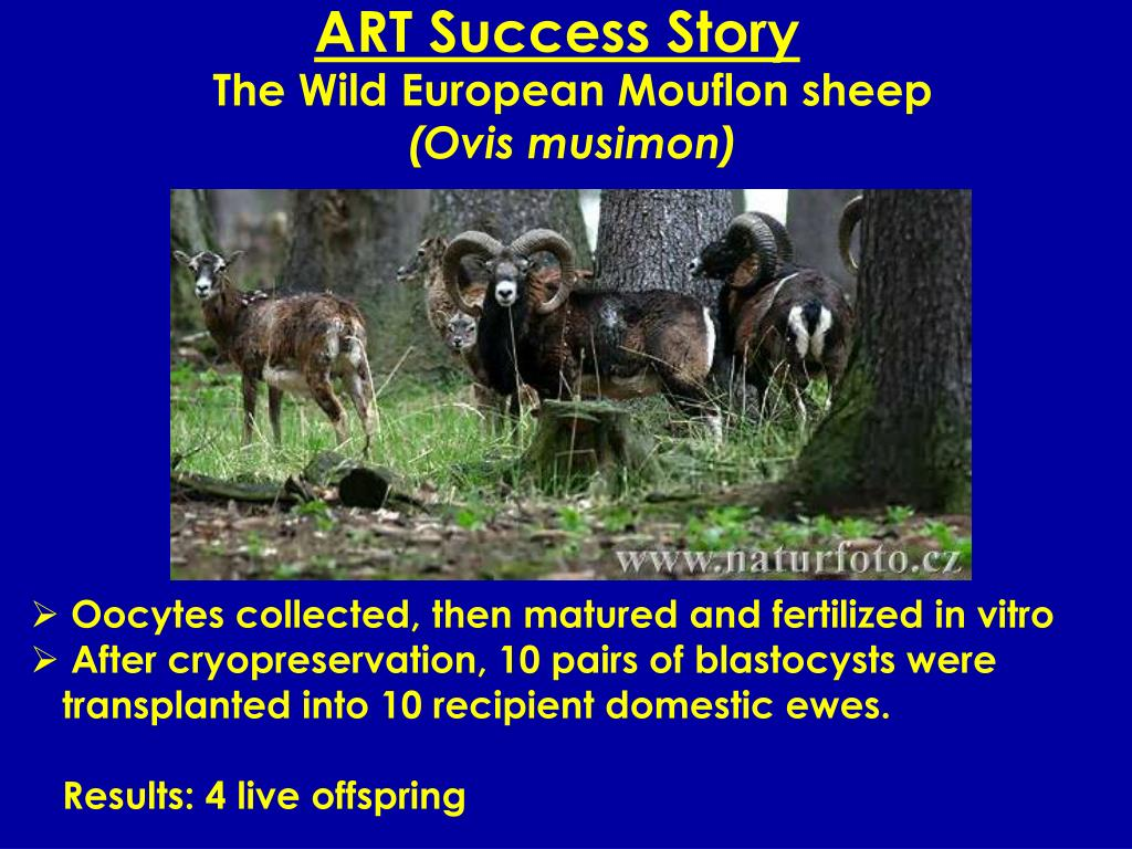 ART Success Story
