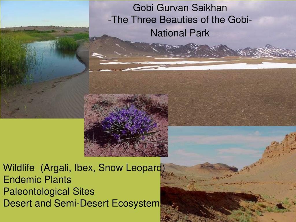 Gobi Gurvan Saikhan