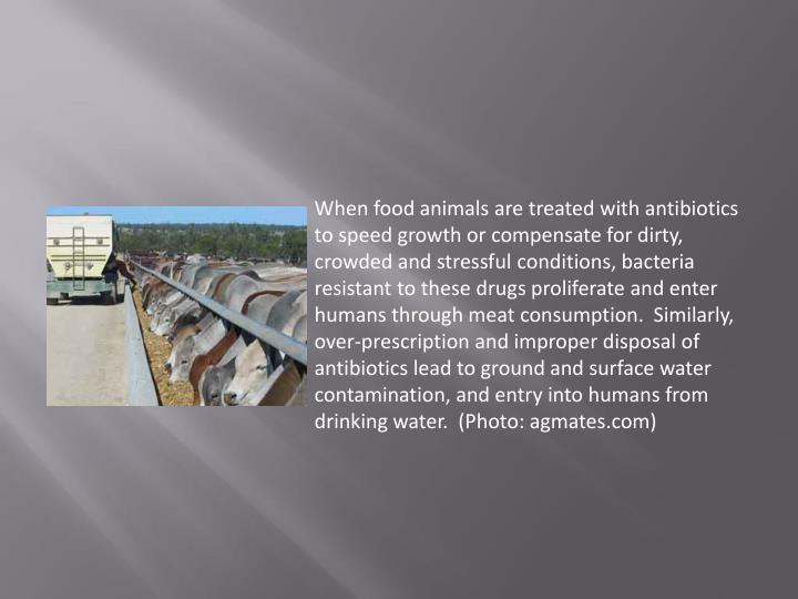 When food animals are treated with antibiotics to speed growth or compensate for dirty, crowded and stressful conditions, bacteria resistant to these drugs proliferate and enter humans through meat consumption.  Similarly, over-prescription and improper disposal of antibiotics lead to ground and surface water contamination, and entry into humans from drinking water.  (Photo: agmates.com)
