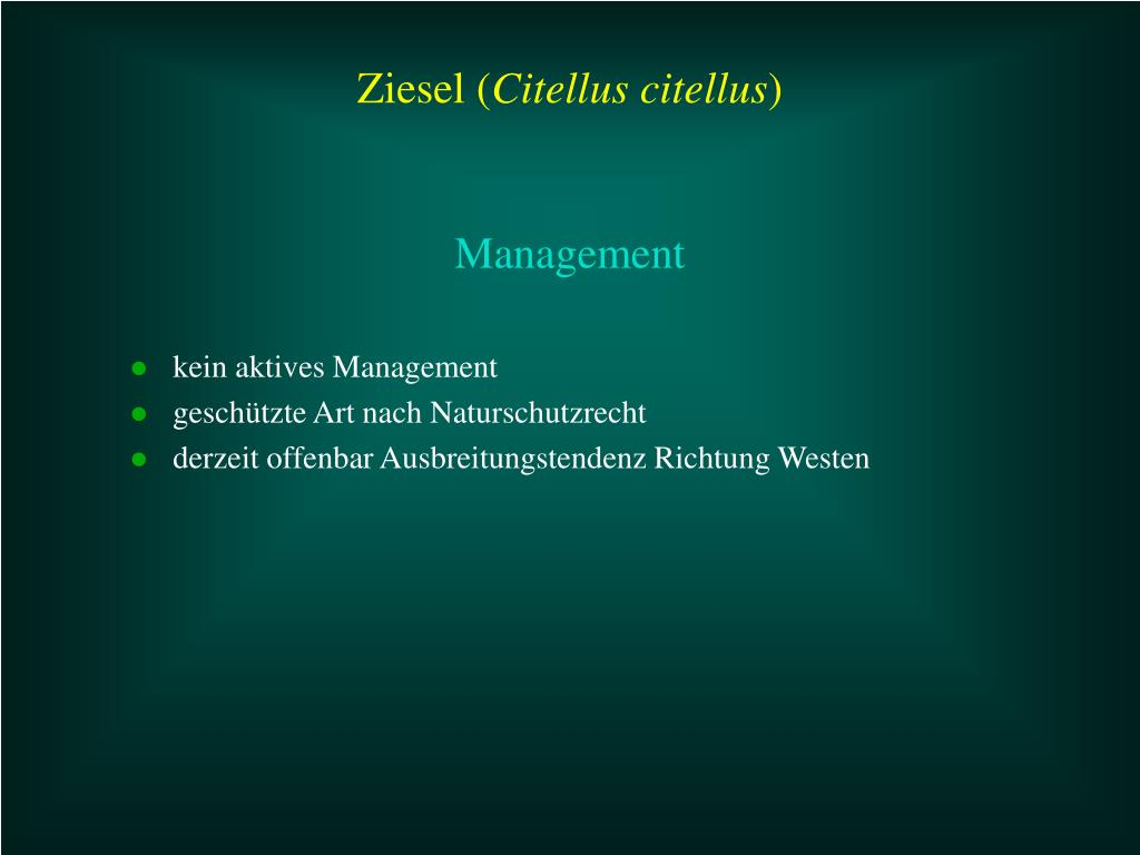 kein aktives Management