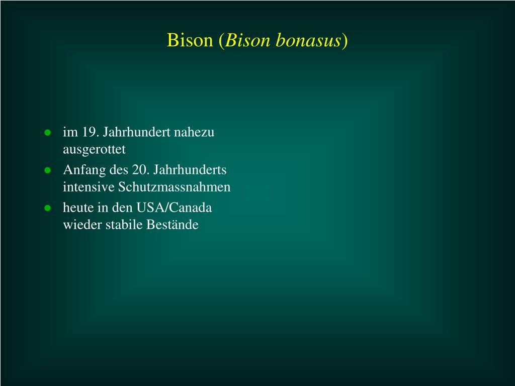Bison (