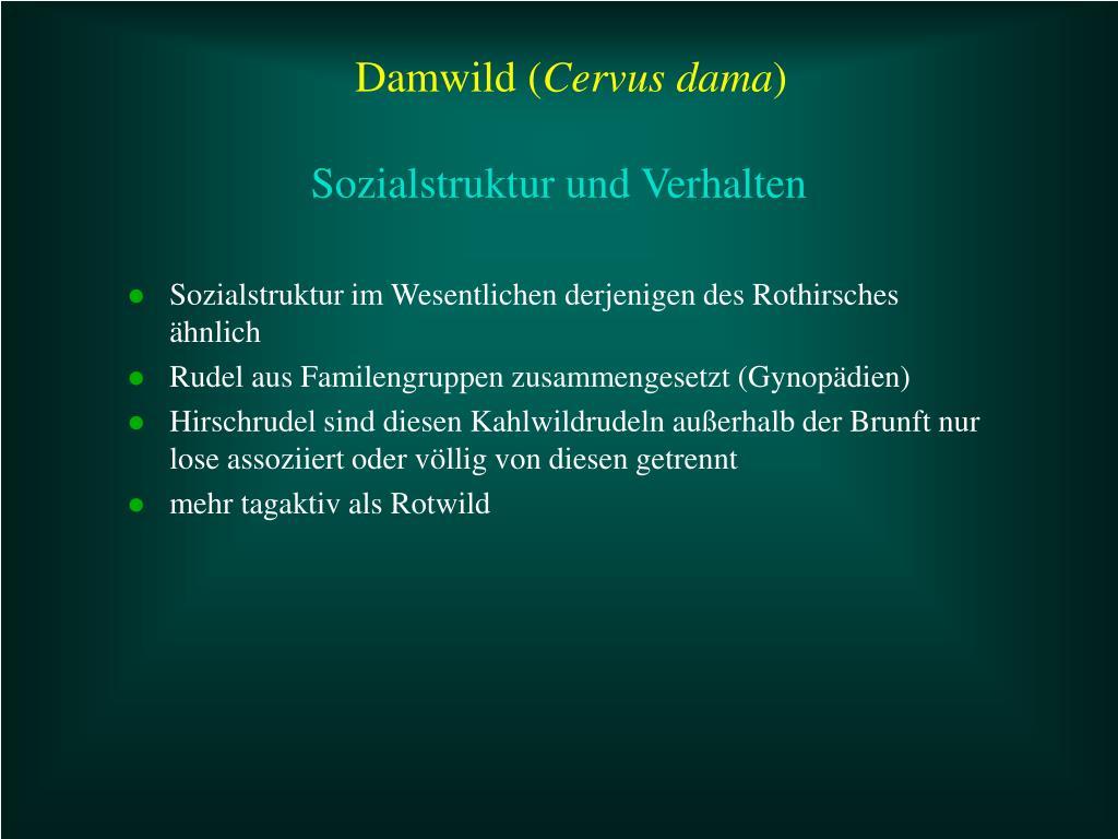 Sozialstruktur im Wesentlichen derjenigen des Rothirsches ähnlich