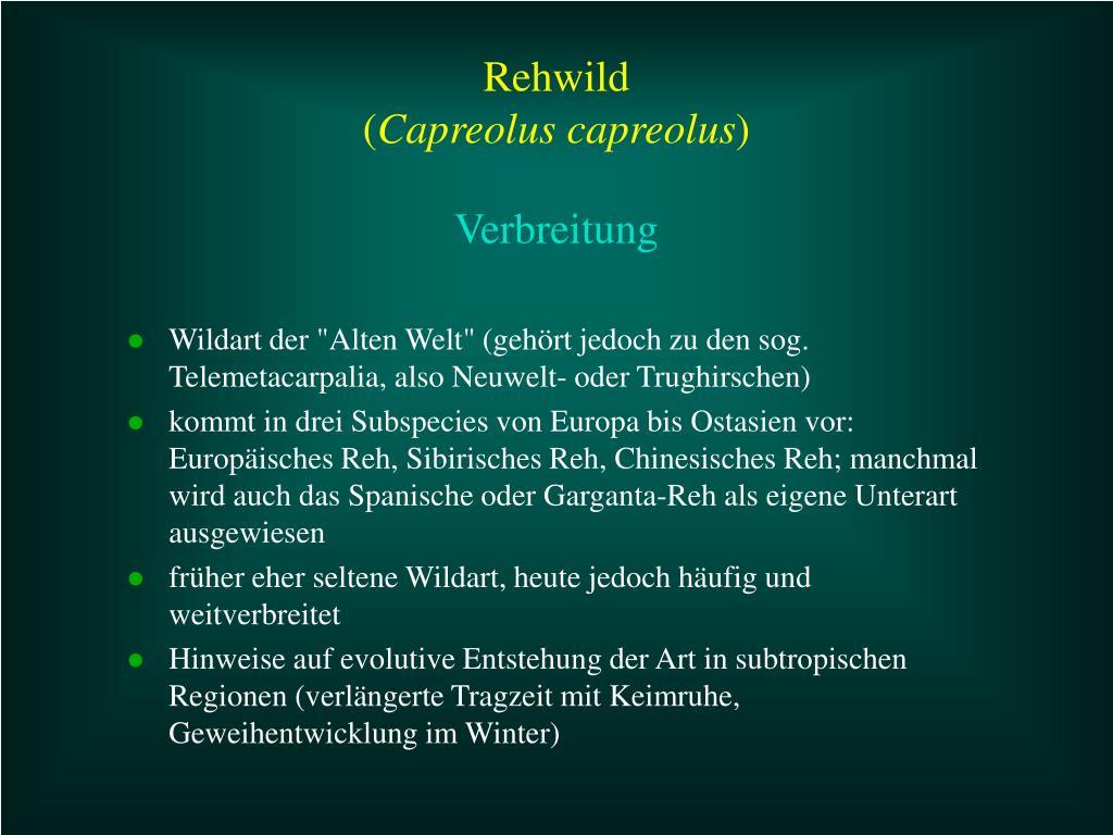 """Wildart der """"Alten Welt"""" (gehört jedoch zu den sog. Telemetacarpalia, also Neuwelt- oder Trughirschen)"""