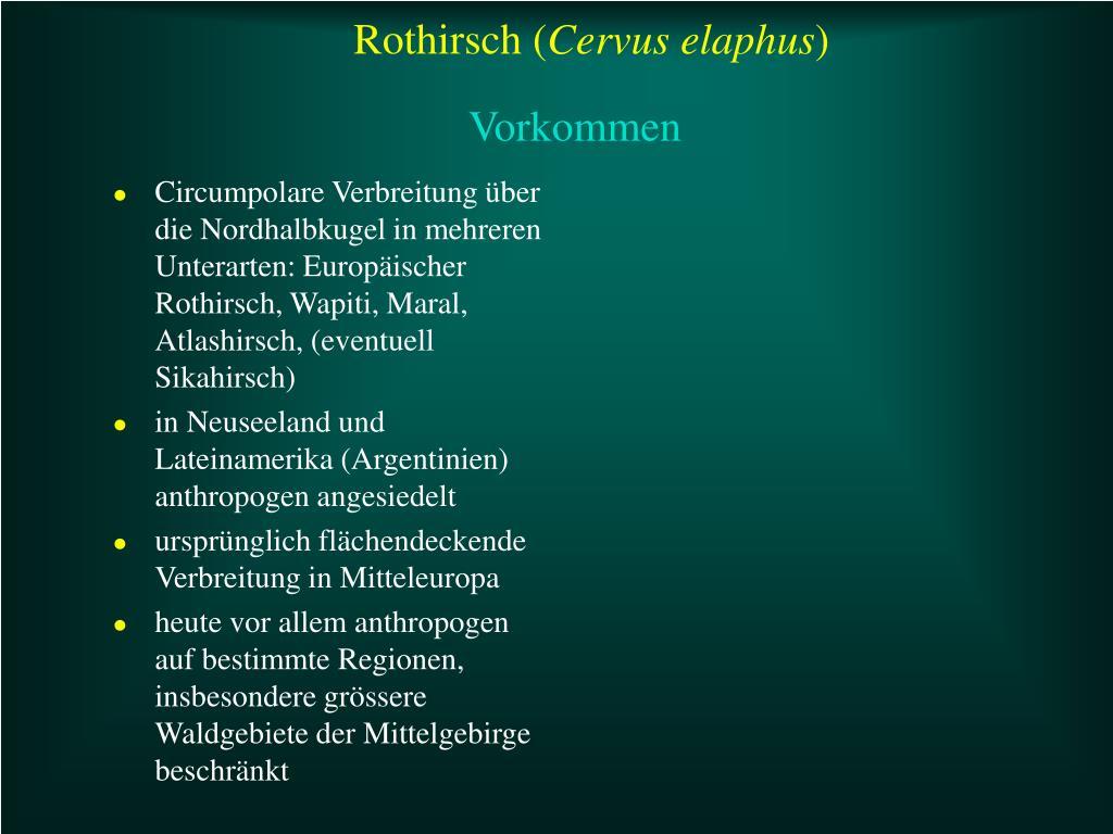 Rothirsch (