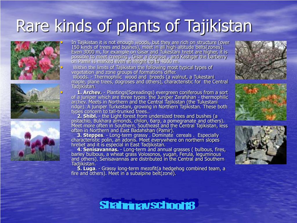Rare kinds of plants of Tajikistan