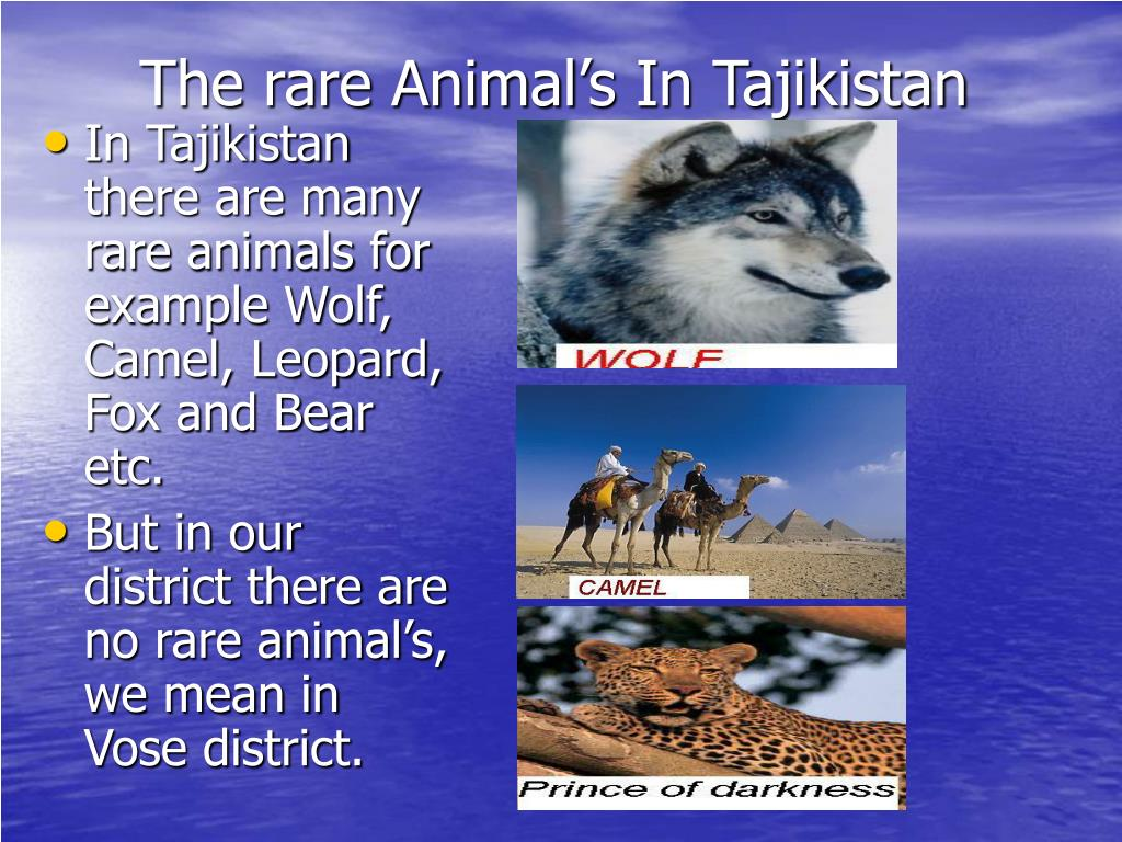 The rare Animal's In Tajikistan