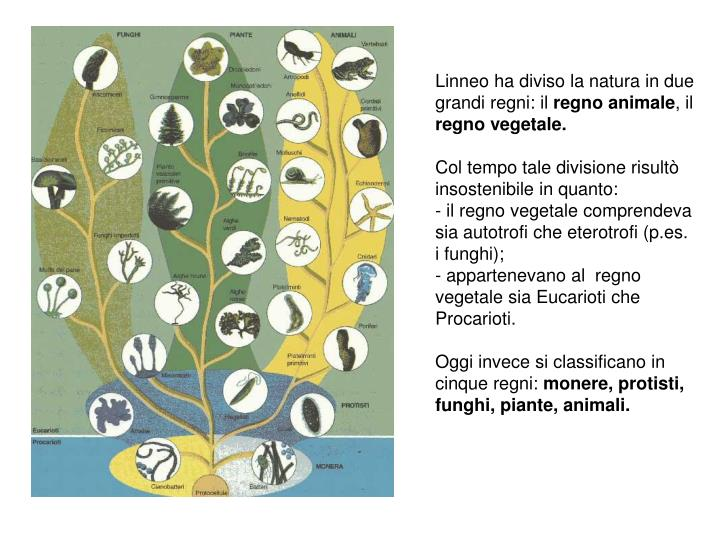 Linneo ha diviso la natura in due grandi regni: il