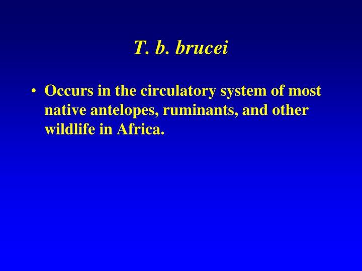 T. b. brucei
