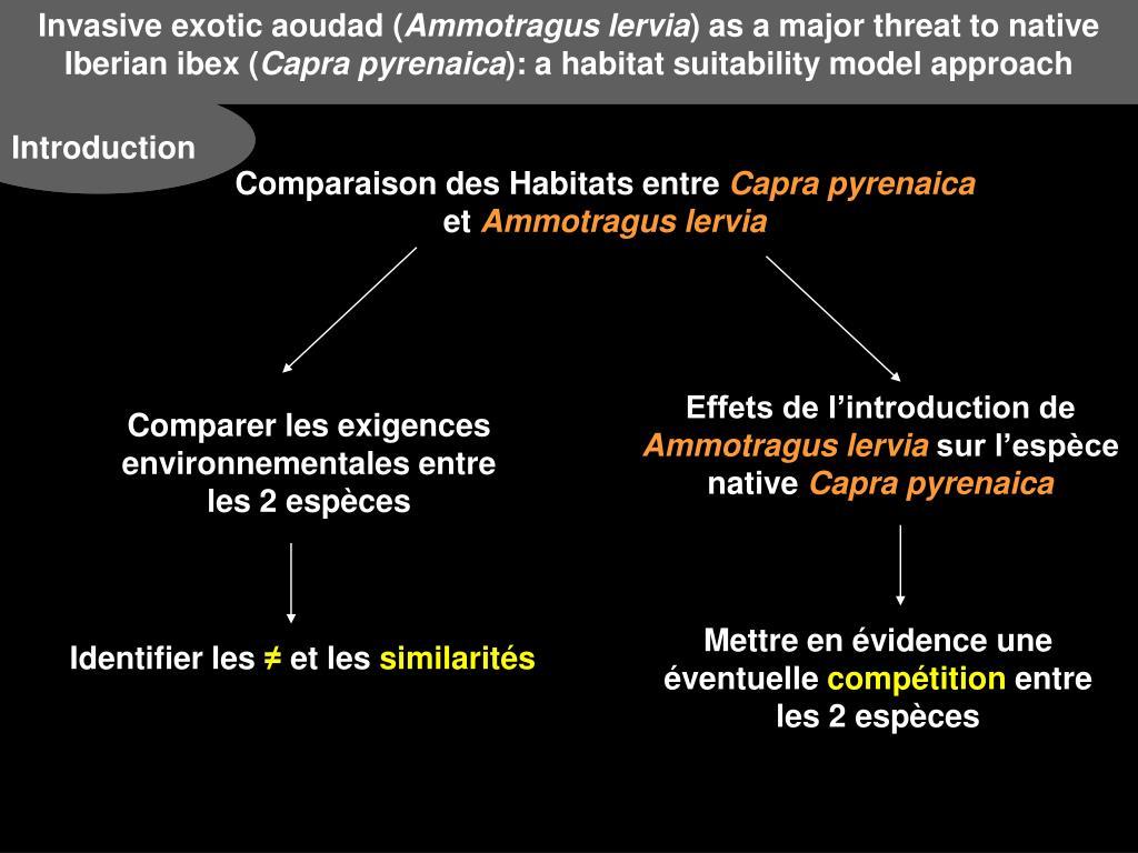 Invasive exotic aoudad (