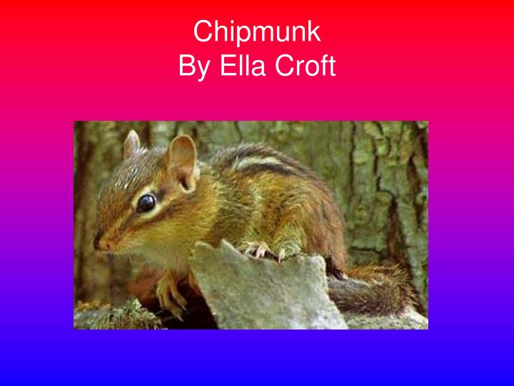 Chipmunk by ella croft l.jpg