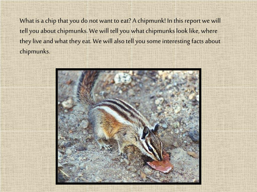 What is a chip that you do not want to eat? A chipmunk! In this report we will tell you about chipmunks. We will tell you what chipmunks look like, where they live and what they eat. We will also tell you some interesting facts about chipmunks.