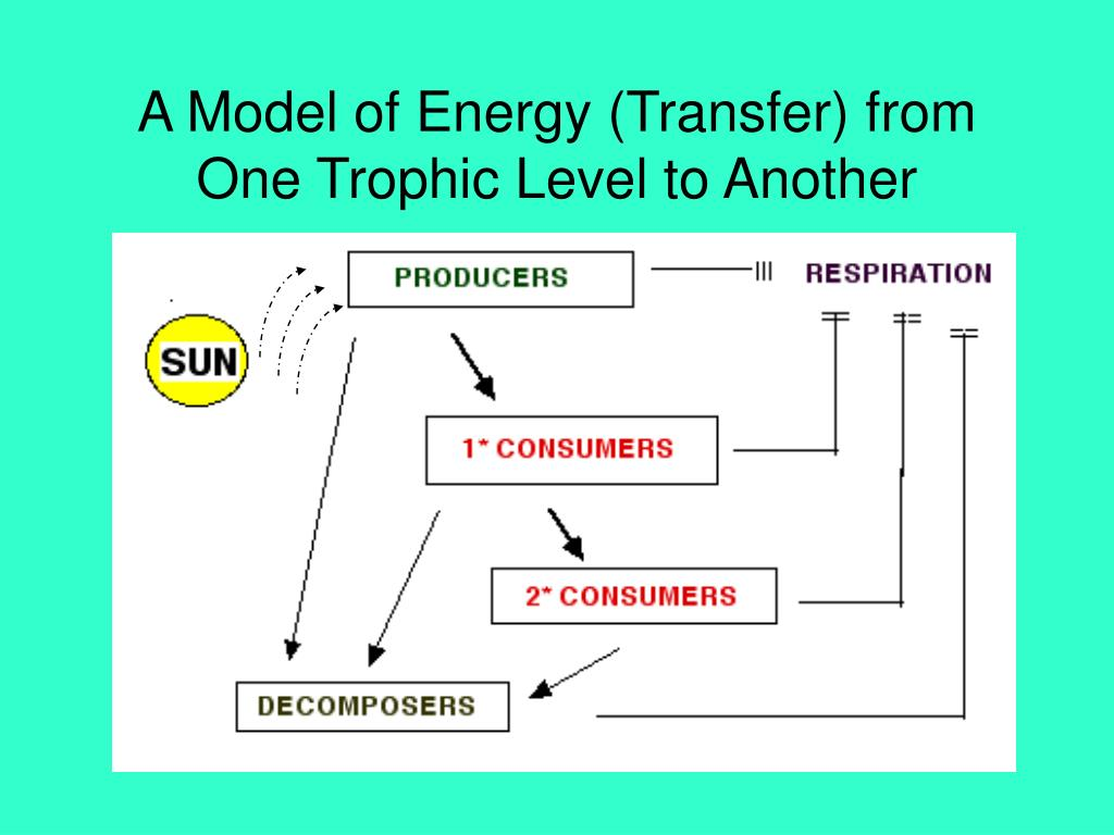 A Model of Energy (Transfer) from One Trophic Level to Another