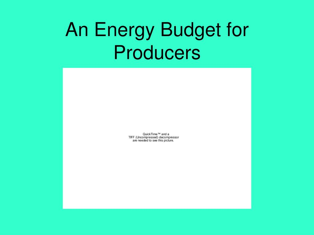An Energy Budget for Producers