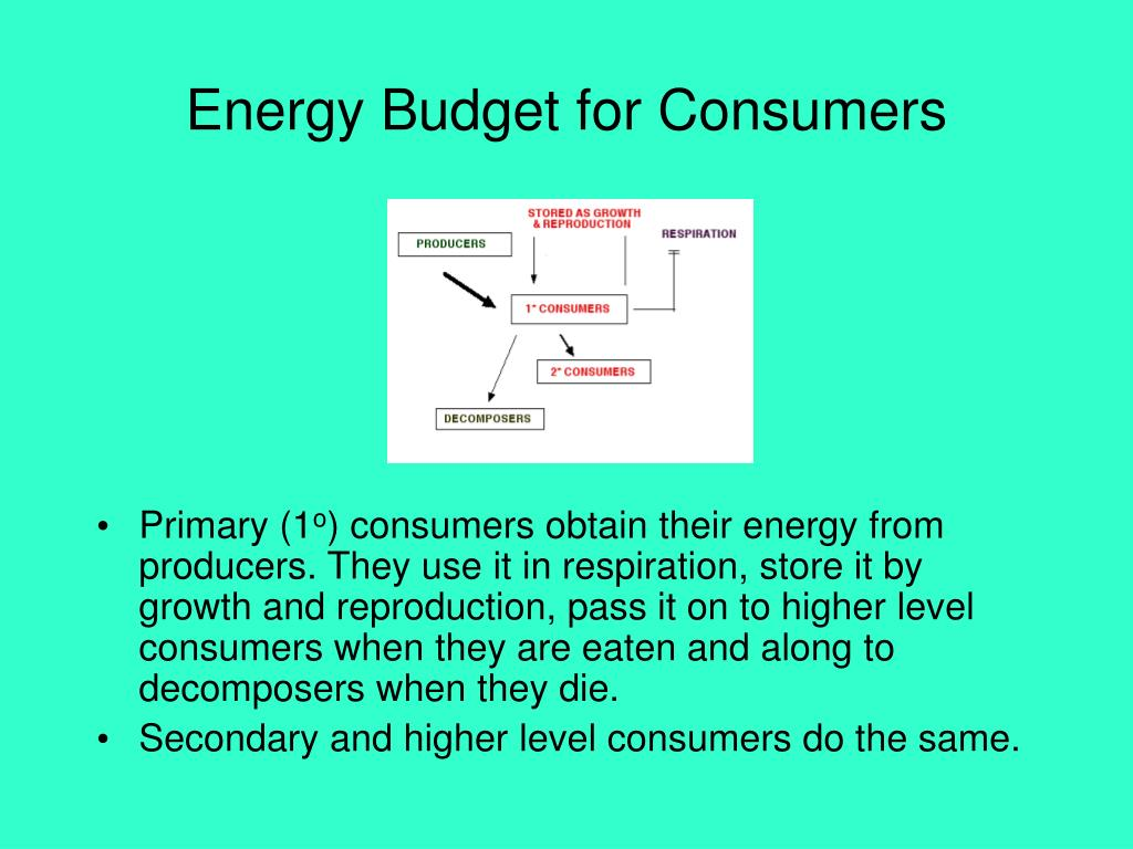 Energy Budget for Consumers