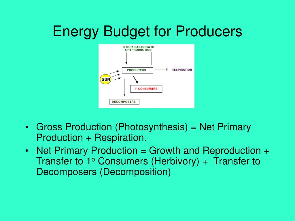 Energy Budget for Producers