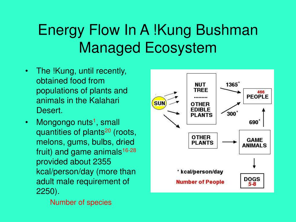 Energy Flow In A !Kung Bushman Managed Ecosystem