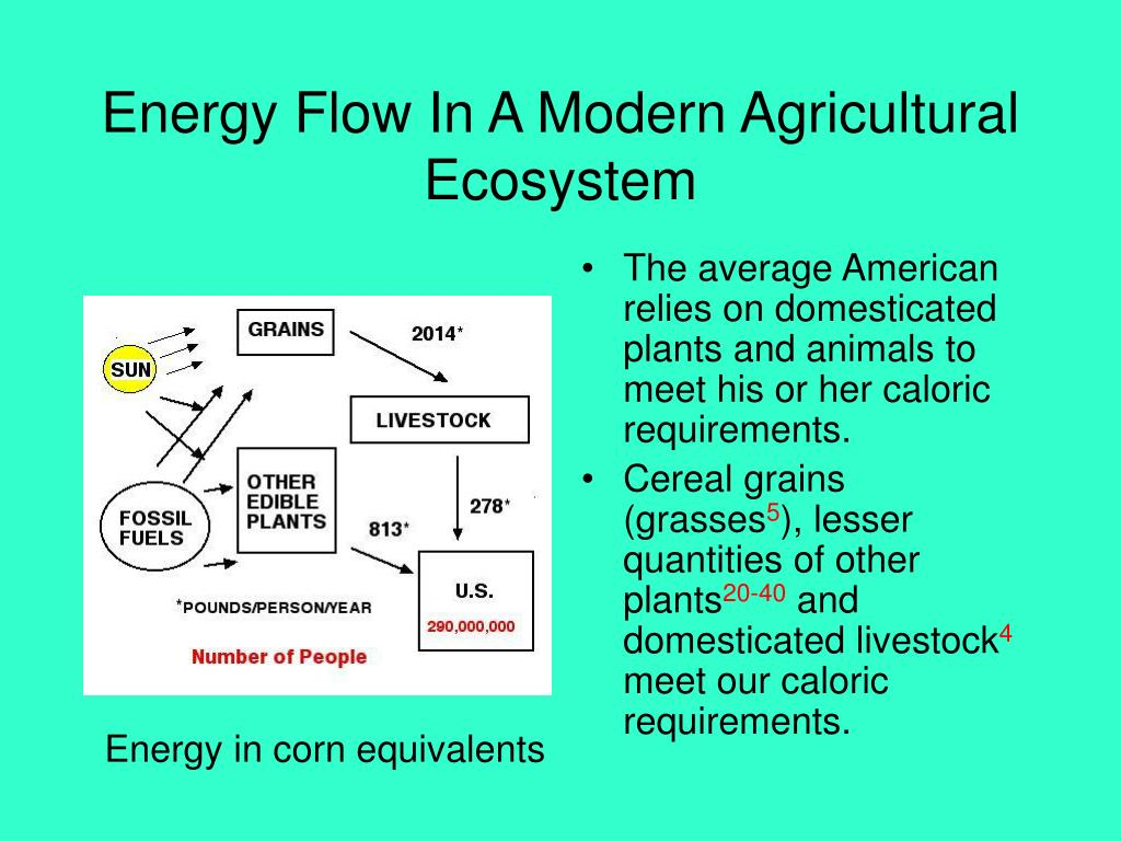 Energy Flow In A Modern Agricultural Ecosystem