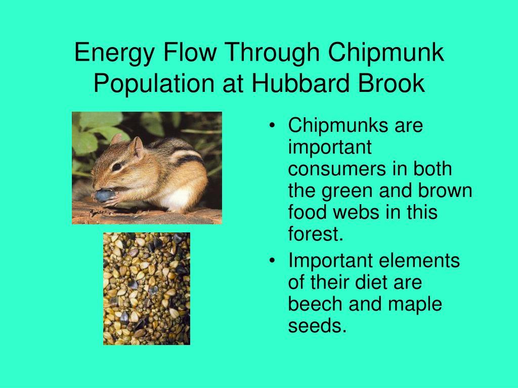 Energy Flow Through Chipmunk Population at Hubbard Brook