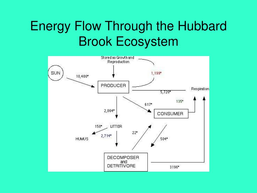 Energy Flow Through the Hubbard Brook Ecosystem