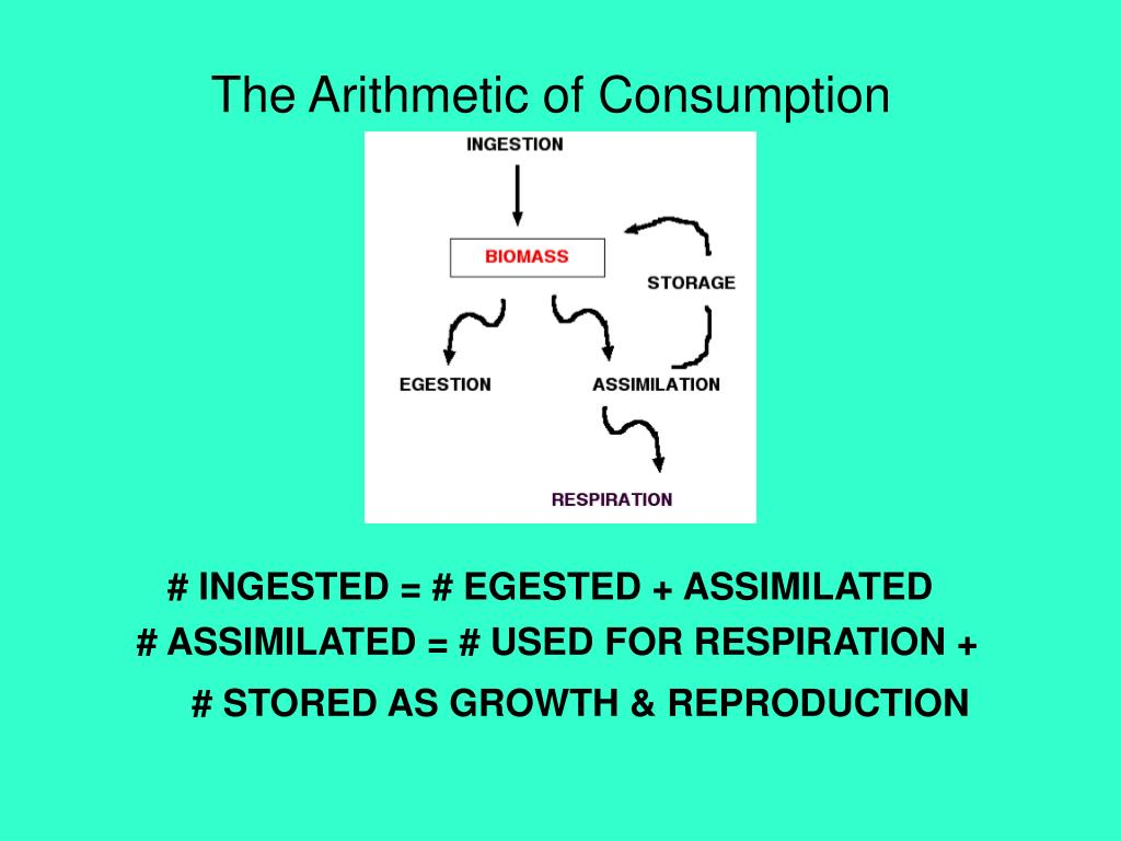 The Arithmetic of Consumption